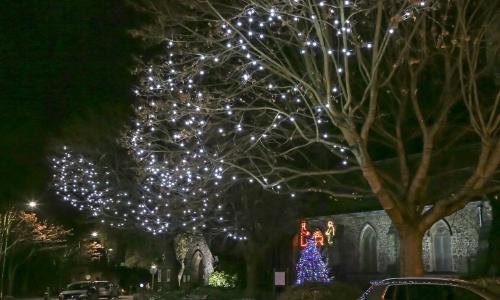 Festoon Lighting in Trees