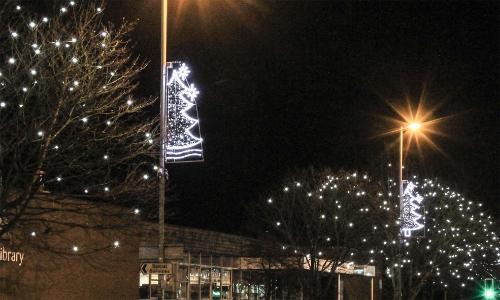 Festoon Lighting in Trees 4